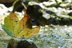 Leaf in water. You can see autunm colour one leaf with shine in water royalty free stock photos