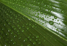 Leaf with Waterdrops Royalty Free Stock Photo