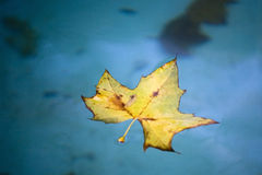 Leaf in wather Royalty Free Stock Photography