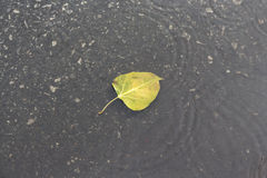 Leaf in wave Royalty Free Stock Photo
