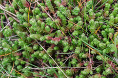 Leaf weeds Stock Image