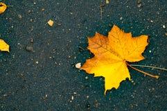 Leaf on wet asphalt in autumn park. Outdoor morning effect Royalty Free Stock Images