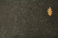 Leaf on wet asphalt. Single leaf with water droplets on wet asphalt Stock Photos