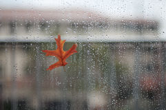 Leaf on wet glass. Autumn leaf. Rain drops. Royalty Free Stock Photography
