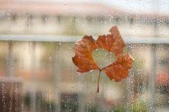 Leaf on wet glass. Autumn maple leaf. Rain drops. Autumn maple leaf stuck to wet the glass window with the rain drops royalty free stock photo