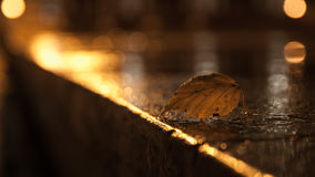 Leaf on wet pavement in the fall. Leaf on wet pavement in the fall Stock Photo