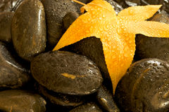Leaf on wet stones. Yellow Leaf on wet stones Royalty Free Stock Photo