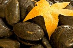 Leaf on wet stones Royalty Free Stock Photo