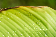 Leaf wet water drop Stock Image