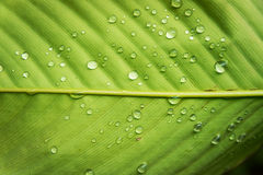 Leaf wet water drop Royalty Free Stock Images