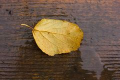 Leaf on the wet wooden background Royalty Free Stock Images