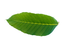 Leaf on white background. The leaf on white background Stock Photo