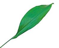 Leaf  on white background Stock Photo