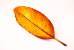 Leaf  on a white. Yellow-red leaf  on a white Stock Photo