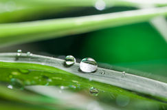 Leaf wiht dew. Natural green background with leaf royalty free stock images