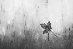 Leaf on a window in the rain Stock Photos