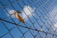 Leaf in wire fence Royalty Free Stock Photo