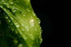 Leaf With Water Drops Royalty Free Stock Images