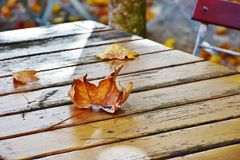 Leaf, Wood, Autumn