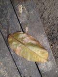 Leaf on wood Stock Photos