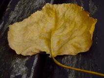 Leaf on the wood bench Royalty Free Stock Photos