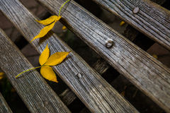 Leaf. On the wood in fall Stock Images