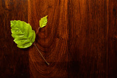 Leaf on wood. Green leaf on solid dark whood Stock Photography
