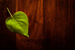 Leaf on wood. Green leaf on solid dark whood Royalty Free Stock Image