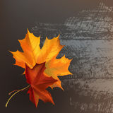 Leaf and wood texture. Autumn maple leafs on gray wooden texture surface Stock Photos