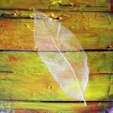 Leaf on wooden background Royalty Free Stock Photo