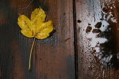 Leaf on the wooden board. Sheet on a wooden table with puddles of rainwater royalty free stock photos