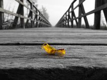 Leaf on a wooden bridge Royalty Free Stock Image