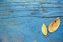 Leaf on wooden floor Royalty Free Stock Image