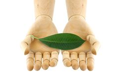 A leaf on wooden hand Stock Image