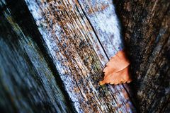 Leaf on woods Royalty Free Stock Photo