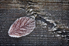Leaf on woood covered by frost crystalls Stock Photography