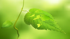 Leaf with a world map. Close up view of a leaf with the world map cut out - ecology concept stock photos