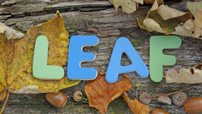 Leaf written Stock Images