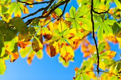 Leaf, Yellow, Autumn, Branch Royalty Free Stock Image