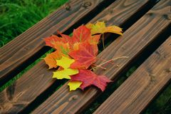 Leaf, Yellow, Autumn, Flora royalty free stock images
