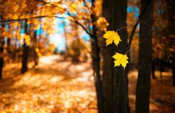 Leaf, Yellow, Autumn, Nature royalty free stock image