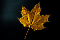 Leaf. Yellow leaf on a black background Stock Photo