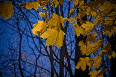Leaf, Yellow, Nature, Autumn royalty free stock images