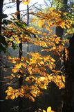 Leaf, Yellow, Nature, Tree stock photography
