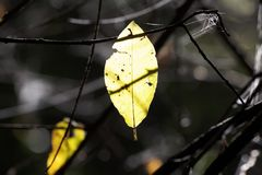 Leaf, Yellow, Spider Web, Plant Royalty Free Stock Images