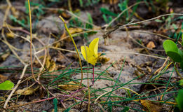 Leaf. Yellow leaf was standing tall on beach Royalty Free Stock Image