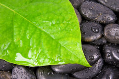 leaf and zen stones after rain. Royalty Free Stock Photo