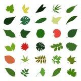 Leaf2 Images stock
