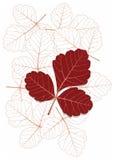 Leaf2 ilustração do vetor