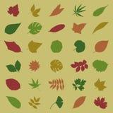leaf5 Obraz Stock